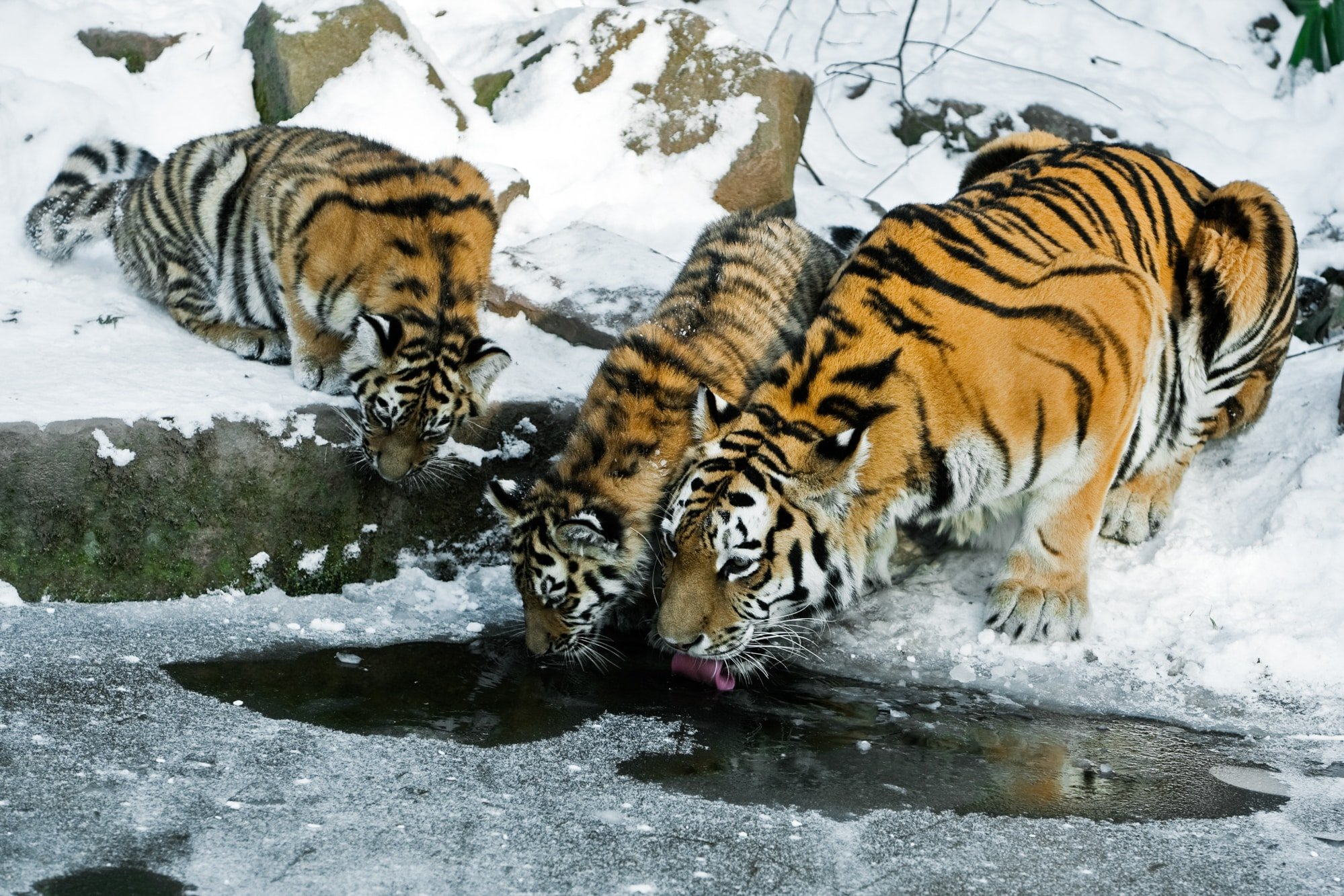 Siberian Tiger Expedition