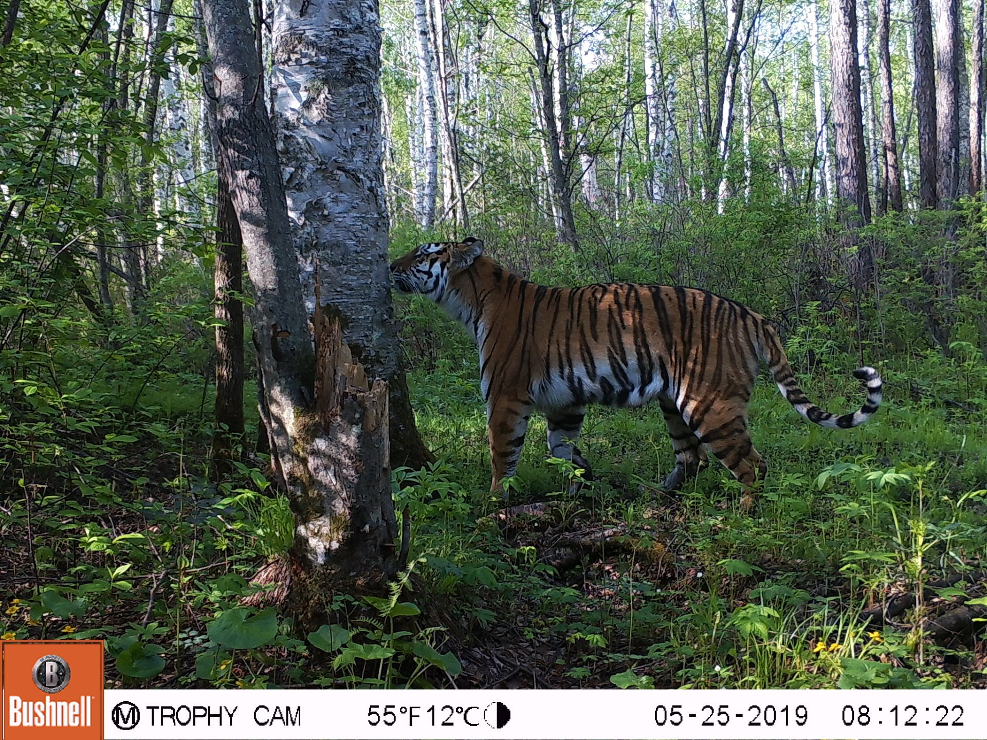 Camera Trapping Workshop