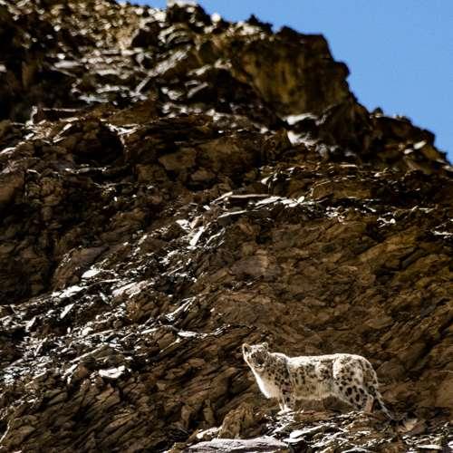Snow Leopard Trip To Tajikistan